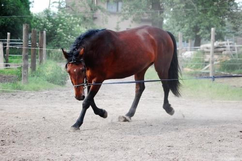 Webinar: Podstawy lonżowania koni,  28 kwietnia 2021 (środa) 18.00 - 20.00